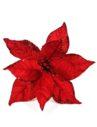 craciunita-rosie
