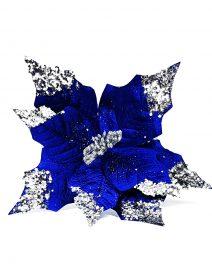 craciunita-albastru-regal